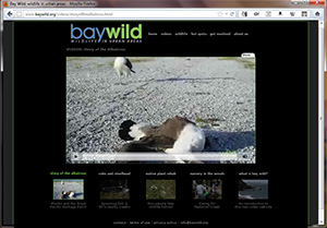Bay Wild website
